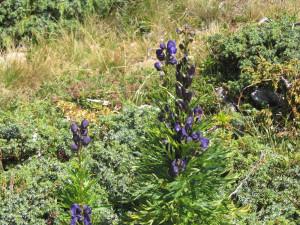 Immagine dalla Val Gardena 1